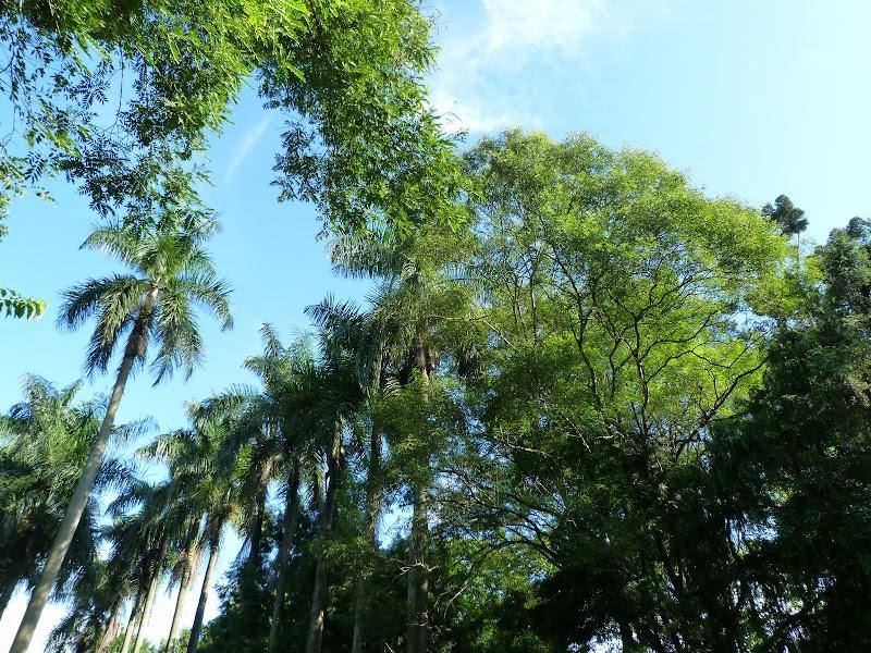 Puli  en passant , entre autres, par les villages de l ethnie Bunum de Loloko et Dili. J 10 - P1160725.JPG