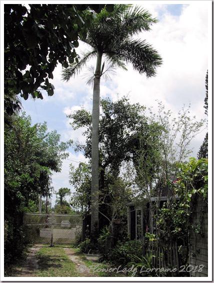 04-15-palm-tree