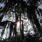 Las ramas dejan colar un poco de azul del cielo