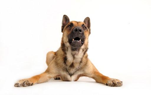 dog-training photo:dog training schools in colorado