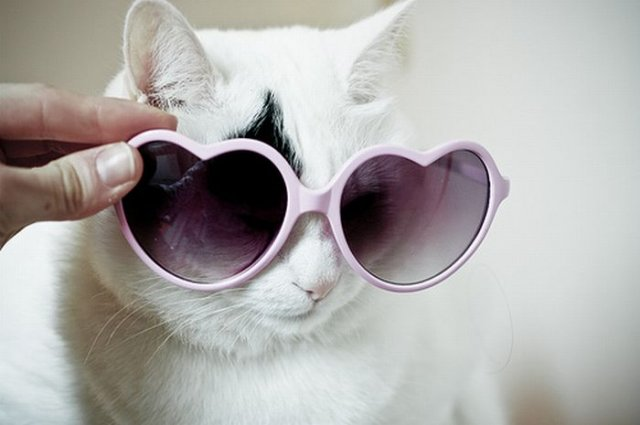 Amazing Funny Cats Wearing Glasses Seen On www.coolpicturegallery.us