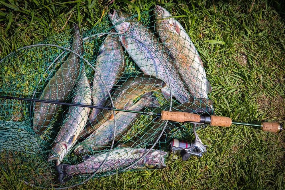 форель в новосибирске ловить