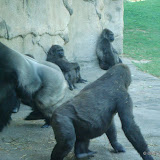 Pittsburgh Zoo Revisited - DSC05179.JPG