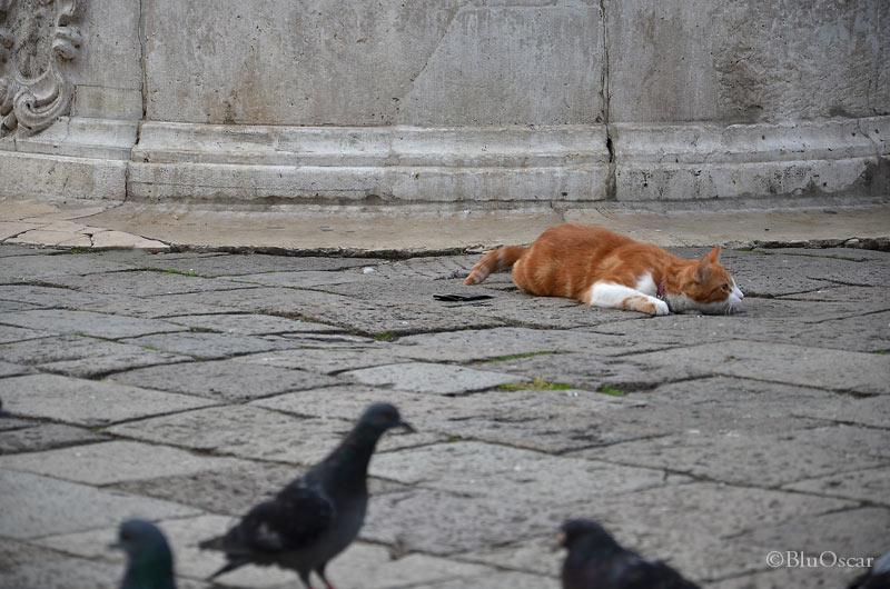 Gatti veneziani 10 10 2015 N 3