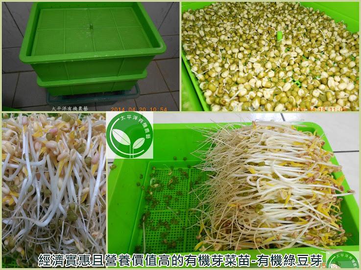 綠豆,綠豆的功效,綠豆子,韓式涼拌豆芽菜食譜,豆芽,種綠豆,發綠豆芽,如何發綠豆芽,炒豆芽菜,種綠豆生長過程