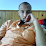 Ahmed Abd - Elhamid's profile photo