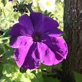 Gardening 2012 - IMG_3158.JPG