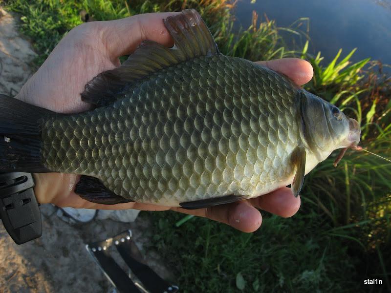 видео рыбалка на карася в казахстане