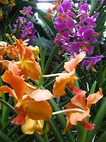 Orchid Garden at the Singapore Botanic Garden