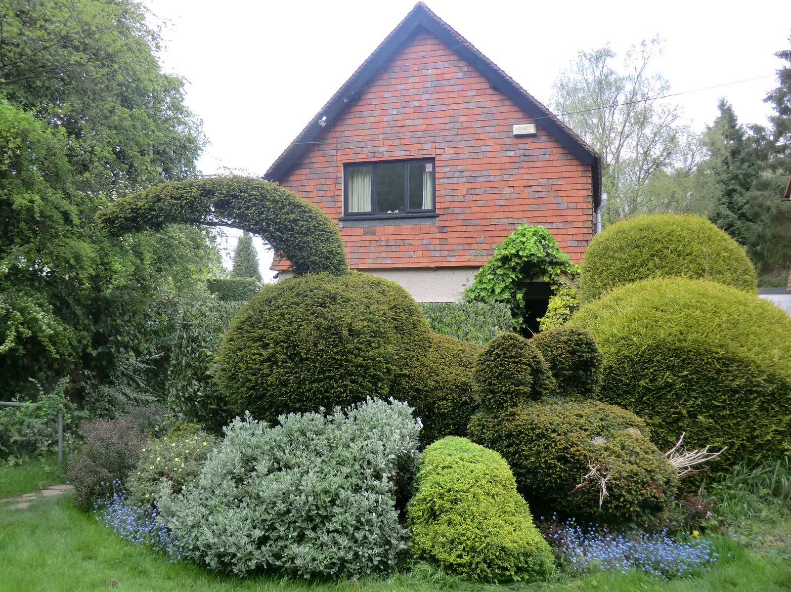 CIMG2949 Bewhiskered cat topiary, Limpsfield Chart