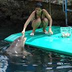 Alimentando a los delfines