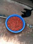 Chillies & cat