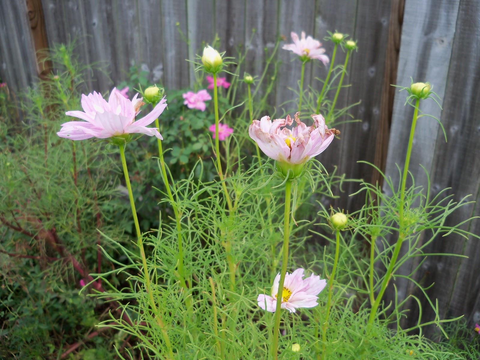 Gardening 2010, Part Three - 101_5293.JPG