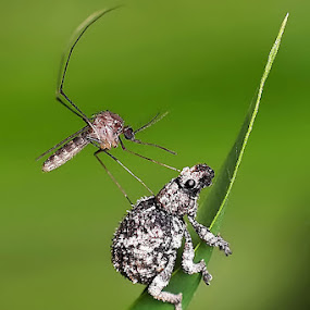by Helnis Susanto Johannis - Animals Insects & Spiders