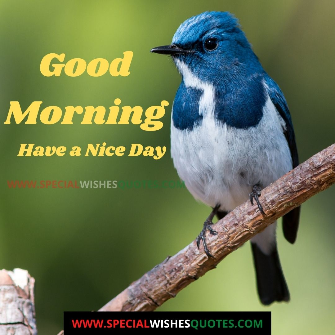 good morning have a nice day images hd