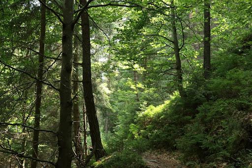 Zeleno v Jaloveckej doline