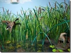 Aquatic life display