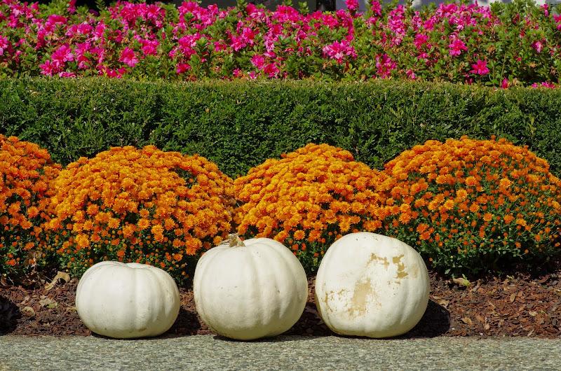 10-26-14 Dallas Arboretum - _IGP4269.JPG