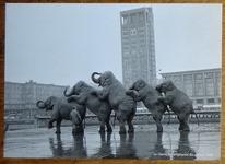 716 11- carte postale éléphants au Havre