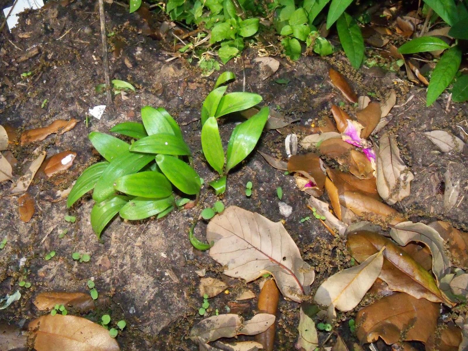 Gardening 2015 - 116_7669.JPG