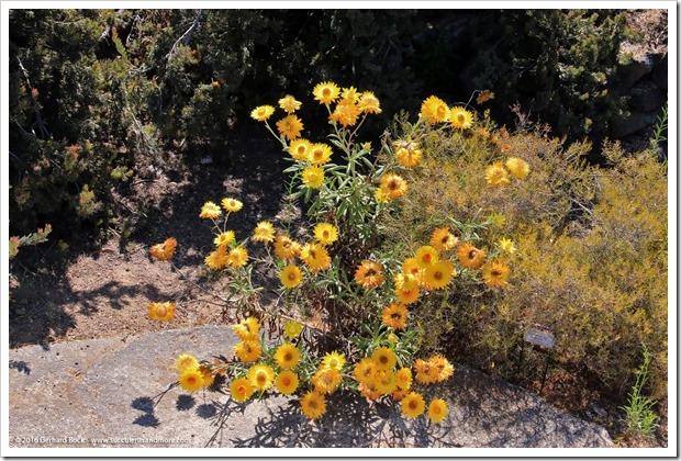 160813_UCSC_Arboretum_187