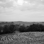 pretty field.jpg