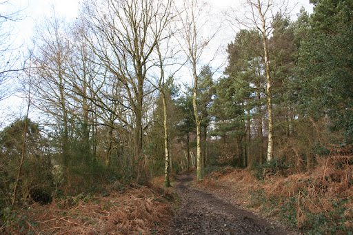09 banstead heath woods