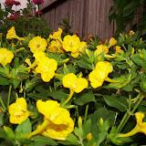 Gardening 2011 - 100_8749.JPG