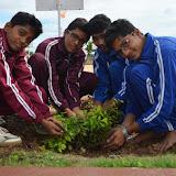 Gurukul Green Revolution (11).jpg
