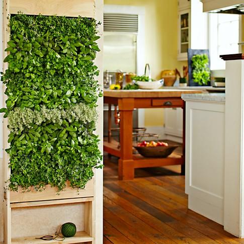 jardín vertical plantas comestibles aromáticas verduras cocina jardines verticales green wall