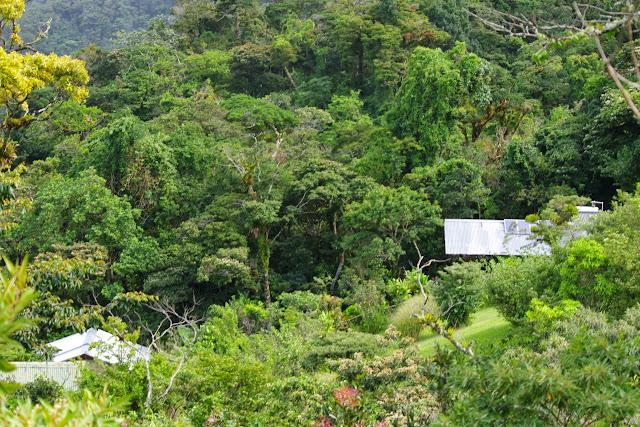 Au pied de la Reserva Forestal De Fortuna. Hornito, 1300 m (Chiriquí, Panamá), 28 octobre 2014. Photo : J.-M. Gayman