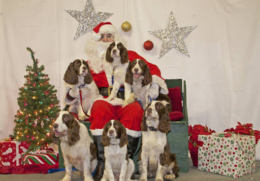 Front (L to R)  Luke - Angie - Ike     Back (L to R)  Bella - Santa - Alex - Jade