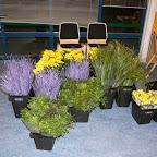 bloemschikken%2525252016-03-2010%2525252010.jpg