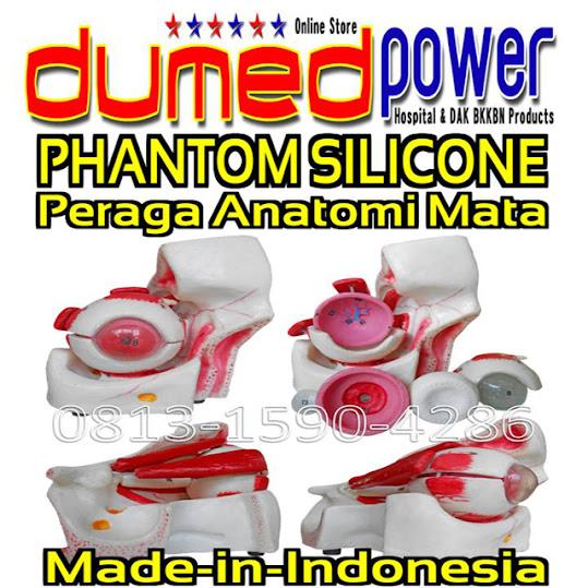 Phantom-Alat-Peraga-Anatomi-Mata-Silikon-Indonesia