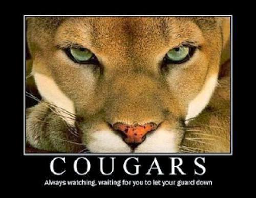 Next Stop Cougar Ville