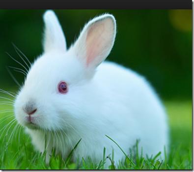 Humor El conejo dela tienda de mascotas