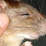 バリ島 動物