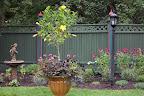 Rob's Garden