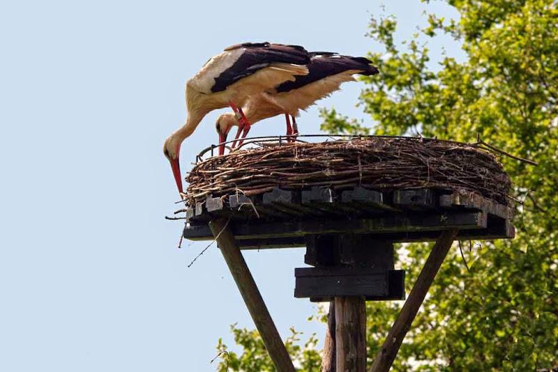 Vogels en dieren - IMG_7269.JPG
