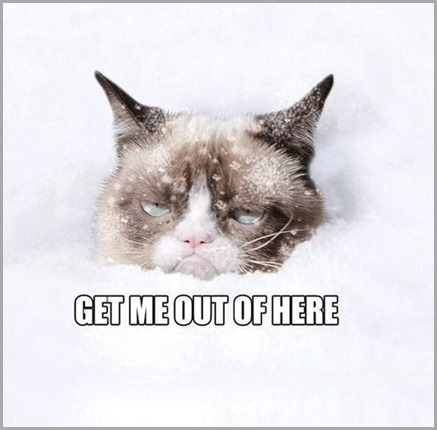 Grumpy-Cat-In-The-Snow