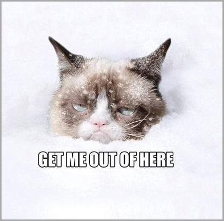 Grumpy-Cat-In-The-Snow
