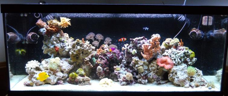 75 Gallon Tank Aquascape Ideas Please Reef Central Online Community