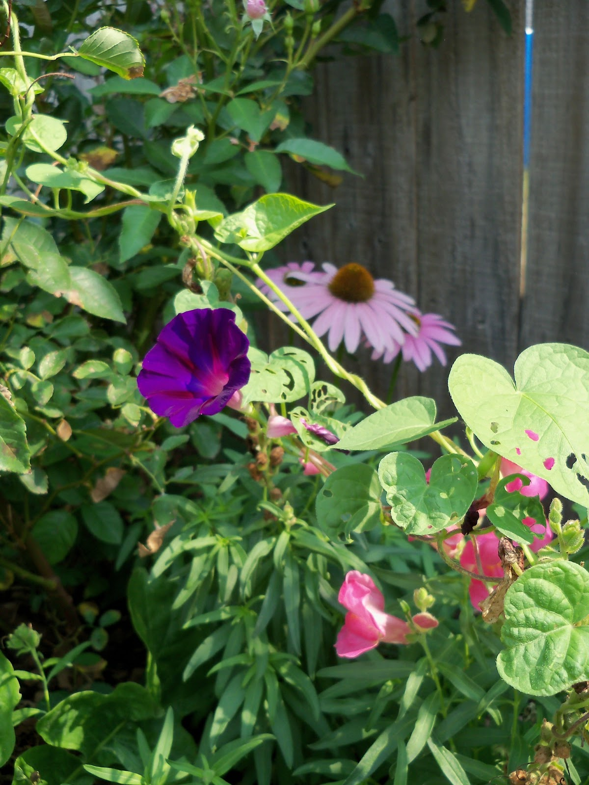 Gardening 2011 - 100_9411.JPG
