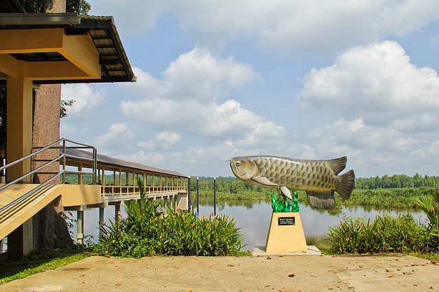 Tasek-Bera-Lake