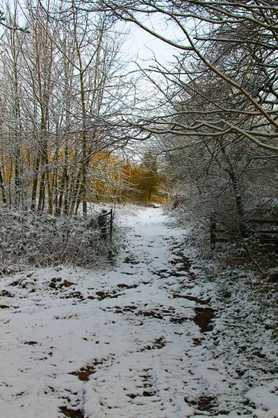 15-snow