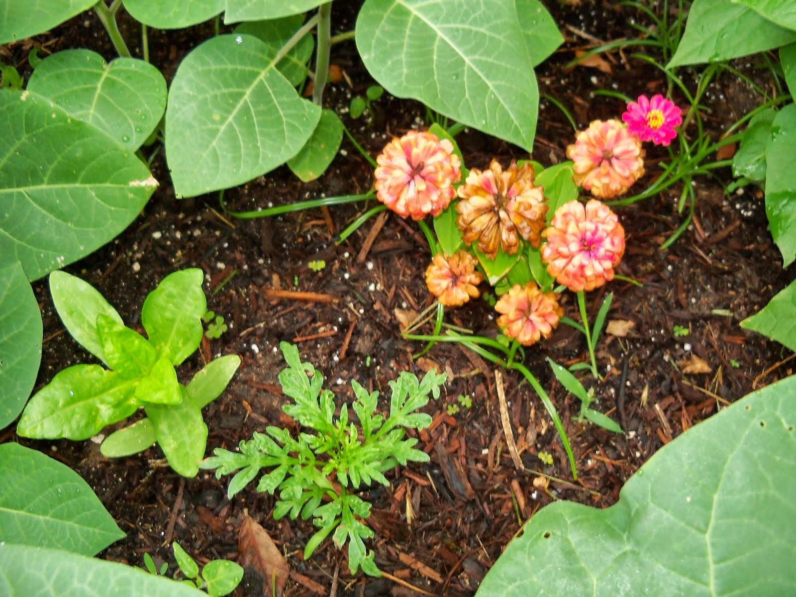 Gardening 2014 - 116_1842.JPG