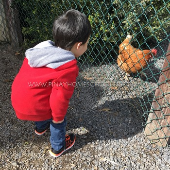 Visiting the Chickens at the Park