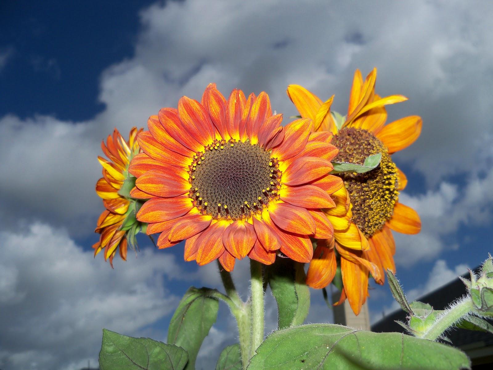 Gardening 2010, Part Three - 101_3669.JPG