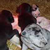 Cheyenne's babies @ 3 1/2 weeks
