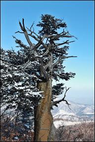 함백산~~~